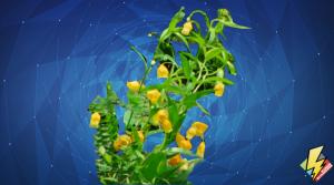 Deandra Flowers